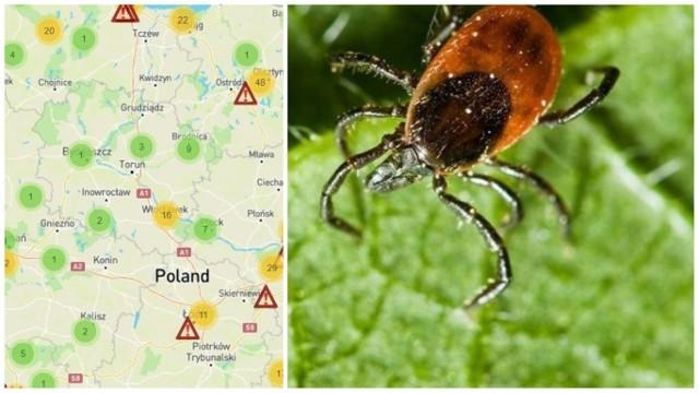 Sprawdź, gdzie dokładnie zaatakowały kleszcze. INFORMACJE NA NASTĘPNYCH SLAJDACH >>>>> Źródło: ciemnastronawiosny.pl/mapa-kleszczy
