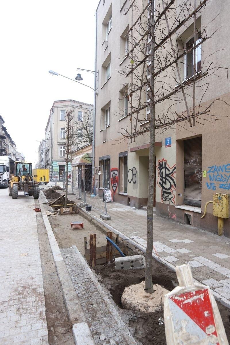 Kiedy pojedziemy Gdańską? Pierwsze takie płaskie lipy w Łodzi sadzone są właśnie na ul. Gdańskiej.
