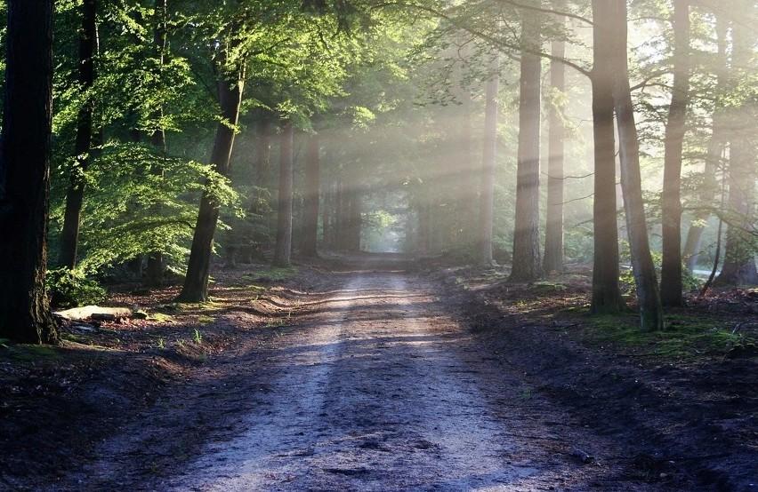 """Nawiedzony las w Kędzierzynie-KoźluTo najbardziej znane obecnie tego typu miejsce na Opolszczyźnie. Znajduje się między osiedlem Piastów a Kanałem Gliwickim. Związane jest z historią """"łysej dziewczynki"""" na rowerku. Panika wśród mieszkańców Kędzierzyna-Koźla, związana z tym miejscem, wybuchła 12 lat temu. W internecie pojawiło się zdjęcie, na którym miała być widoczna postać zjawy. Mieszkańcy zaczęli  odwiedzać to miejsce, by sprawdzić mrożące krew w żyłach opowieści. Wielu z nich przekonywało, że faktycznie czuje tu czyjąś obecność. Niektórzy twierdzili, że na leśnym trakcie czuć chłód dużo większy, niż gdziekolwiek indziej w okolicy. Temat opisały media, część mieszkańców wpadła w panikę. W szkołach organizowano specjalne pogadanki dla uczniów, zaangażowano do pracy psychologów. Tematem zajęła się nawet prokuratura, która chciała sprawdzić, kto straszy mieszkańców. Śledczy niczego jednak nie wyjaśnili. Według legendy ukazująca się w tym miejscu dziewczynka to duch zamordowanego dziecka. Według jednego z podań zbrodni miał się dopuścić ojciec, w innym winni są żołnierze. We wszystkich relacjach dziewczynka nie ma włosów, miały jej zostać wyrwane podczas makabrycznej zbrodni."""