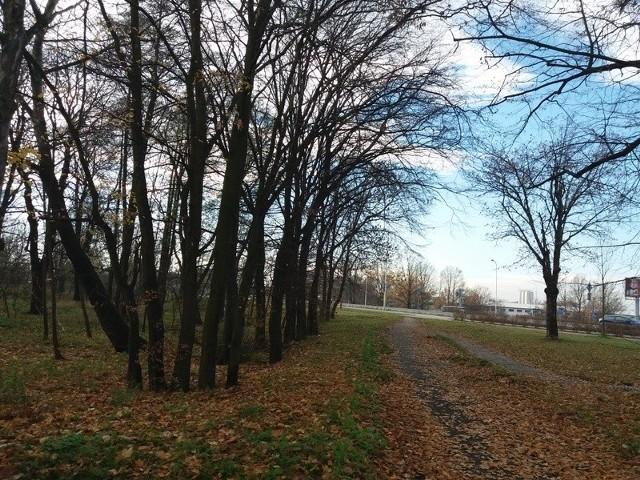 teren planowanego parku na Poświętnem
