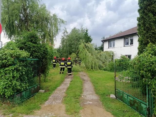 Po godz. 17.00 OSP w Rzekuniu i OSP w Ostrołęce usuwały drzewo, które przewróciło się na budynek mieszkalny