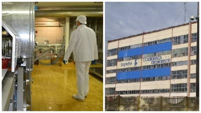 Po budynku ostrowickiej cukrowni nie została nawet cegła. Z prawej strony - produkcja serów dojrzewających z rypińskiej mleczarni