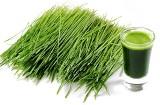 Zielony jęczmień cena, zielony jęczmień odchudzanie