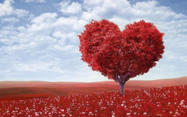 Wierszyki walentynkowe 2020. 14 lutego zaskocz ukochaną osobę wierszem miłosnym