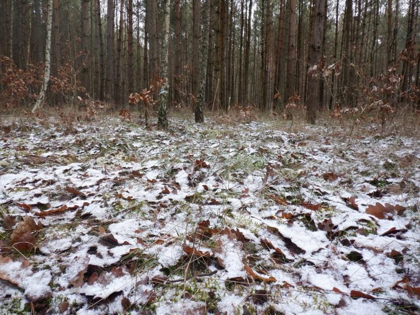 Pogoda w Kujawsko-Pomorskiem. Resztki śniegu ukrywają się w lasach i na polach [zdjęcia]