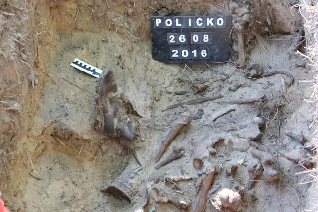 W mogile znajdowały się szczątki ośmiu osób