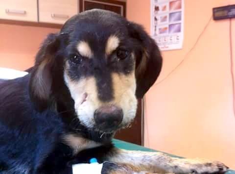 Poparzona żrącym płynem Layla czuje się już lepiej. Obrońcy praw zwierząt znaleźli jej nowy dom