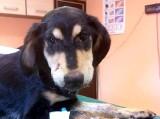 Wlał psu do pyska środek do czyszczenia rur