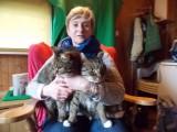Jacek i Wacek, dwa cudne koty, potrzebują nowego domu, choć na trochę