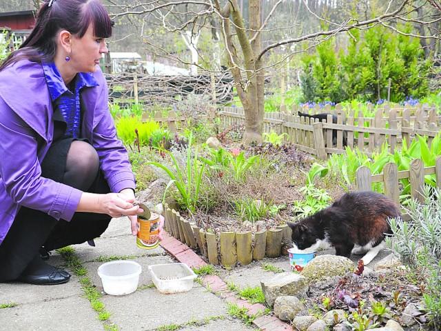 - Kotów jest 12. Wszystkie zdrowe i naprawdę nie czynią szkód - mówi Dorota Hanuszewska.