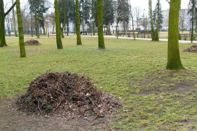 Być może w koluszkowskim parku stanie publiczna toaleta.