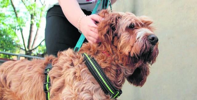 Jak relacjonują włocławianki, pies zaczął sprawiać problemy dopiero po kilku tygodniach.