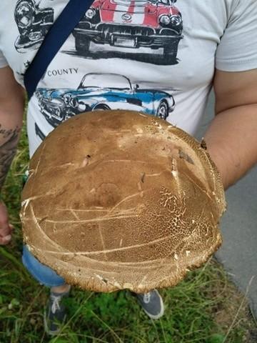 Pan Tomasz znalazł 0,5 kilogramowego prawdziwka w lesie w...