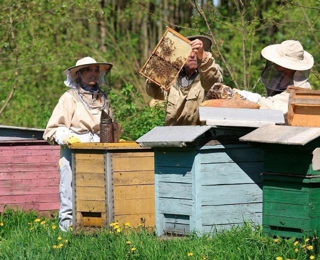 Pszczelarze nie chcą dopuścić do tego, żeby rolnicy wytruli ich pszczoły