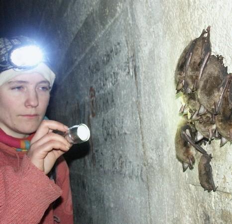 Przyrodniczy raz w miesiącu liczą nietoperze zimujące w podziemiach tras turystycznych. W styczniu przyszłego roku podobna akcja odbędzie się w całym rezerwacie.