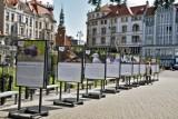 Kto w Bydgoszczy ćwierka? Widać na zdjęciach bydgoskiej ornitolożki, Moniki Wójcik-Musiał