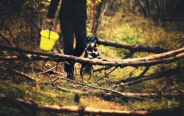 Podczas spaceru w lesie palce umarlaka potrafią nieźle przerazić.
