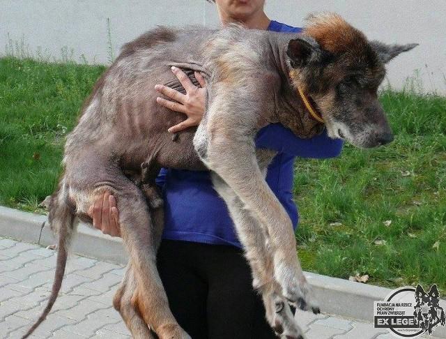 Dwa psy zostały odebrane właścicielowi ze względu na ich tragiczny stan zdrowia