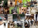 Te psy ze schroniska w Dyminach czekają na dom. Wybierz czworonoga i przygarnij. Część 2 (ZDJĘCIA)