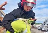 Strażacy z Szubina uratowali bociana. Ptak wpadł do komina [zdjęcia]