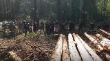 Puszcza Białowieska. Straż Leśna interweniowała wobec Obozu dla Puszczy (wideo)