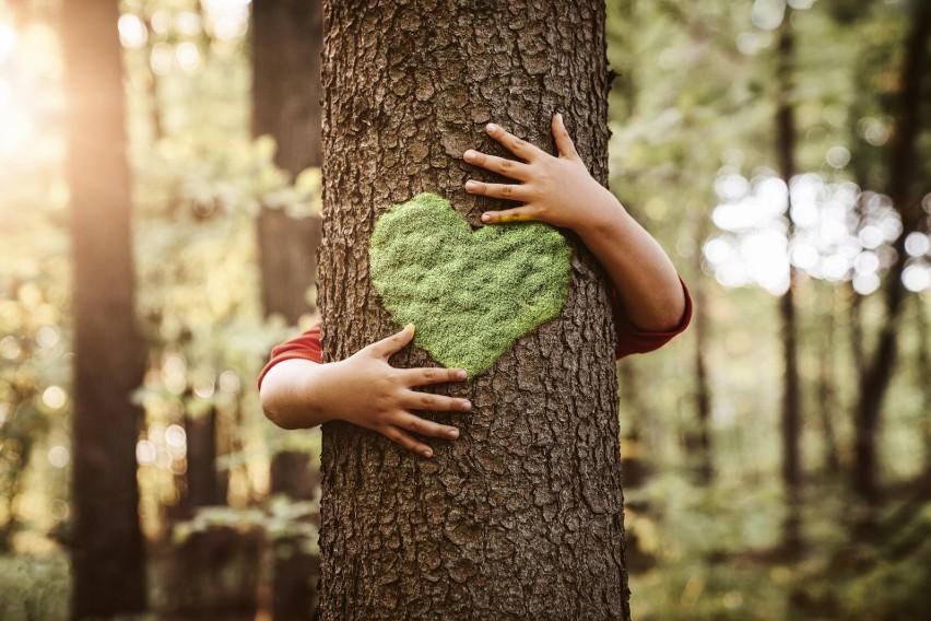 Za co powinniśmy kochać drzewa? Podróżują, rozmawiają, przywołują deszcz. I są nam bardzo potrzebne. Chrońmy je!