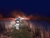 Strażacy drugi dzień gaszą pożar lasu w Szydłowcu. Znowu dali o sobie znać podpalacze
