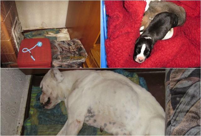 Tuż obok leżały jeszcze żywe ok. 6 dniowe szczenięta. Były tak wycieńczone, że nie dało się ich już uratować. Zostały poddane eutanazji.