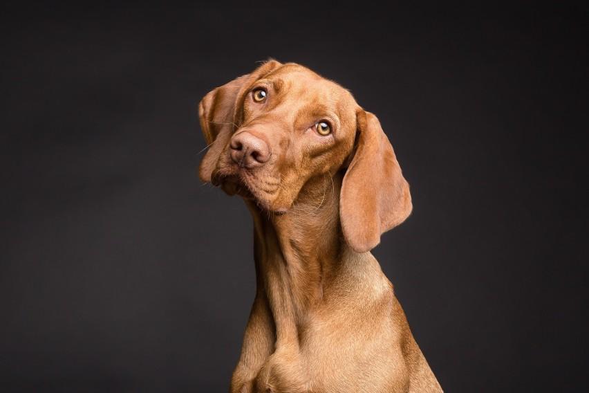 Najpiękniejsze zdjęcia psów - oto fotografie, które podbiją wasze serca
