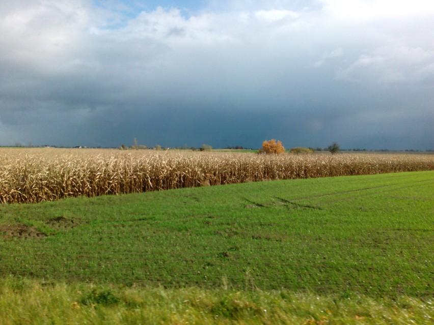 W 2020 roku ARiMR skontrolowała 3738 rolników.