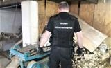Zorganizowana grupa przestępcza rozbita. Przestępcy przemycali liście tytoniu z Niemiec do Polski i produkowali wyroby tytoniowe
