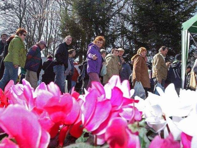 Wiosenne targi ogrodnicze w StrzelinieNa wiosennych targach w Strzelinie zawsze jest ogromny wybór kwiatów balkonowych i do ogródków.