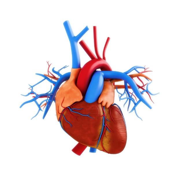 Izraelskim naukowcom jako pierwszym na świecie udało się wydrukować w technologii 3D serce wraz z naczyniami krwionośnymi.