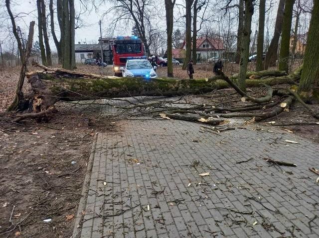 12-letnia dziewczynka została przygnieciona drzewem w parku w Skępem. W ciężkim stanie została zabrana do szpitala.Do wypadku doszło w parku niedaleko kaplicy w Borku. Dwie dziewczynki jeździły alejkami w parku, nagle na jedną z nich przewróciło się drzewo. 12-latka została przygnieciona konarami drzewa. Doznała poważnych urazów głowy i do szpitala została zabrana helikopterem.Na miejscu pracowali strażacy z JRG Lipno i OSP w Skępem, a druhowie z OSP w Wiosce zostali zadysponowani do zabezpieczenia lądowiska dla helikoptera LPR. Drzewo, które się przewróciło nie było w najlepszej kondycji. Nie było jednak wcześniej sygnałów, by mogło się przewrócić. Sprawę bada lipnowska prokuratura, śledczy byli na miejscu wypadku.