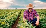 Magnez w uprawie roślin. Dlaczego jest potrzebny w glebie i jak go dawkować? Uprawy skorzystają na takim nawożeniu