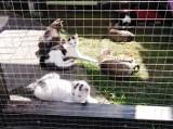 Tarnów. Miłośnicy zwierząt pomogli urządzić dodatkowe miejsce w kocim szpitaliku [ZDJĘCIA]