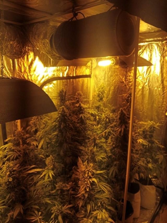 Policjanci u 34-letniego mieszkańca Zdzieszowic znaleźli plantację konopi indyjskich oraz kilogram narkotyków.