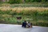 Poznań: Na Cybinie powstały pływające ogrody. Zobacz, jak wyglądają [ZDJĘCIA]