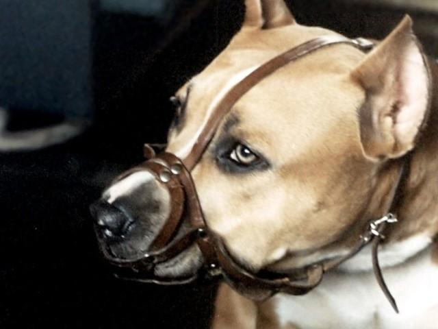 Strażnicy poprosili kobietę o założenie psu kagańca.