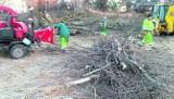 Robotnicy usuwają  z  parku  połamane  drzewa