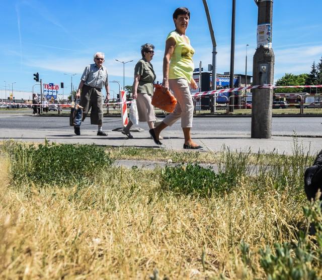 05.06.2015 bydgoszcz sucha trawa susza goraco  fot dariusz bloch/polska press