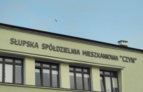 44-letnia Iwona Falkowska, dotychczasowy wiceprezes Czynu, została nowym szefem Spółdzielni Mieszkaniowej Czyn.