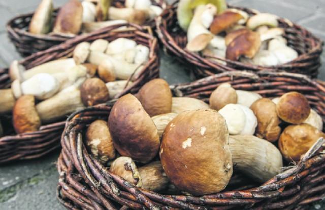 """W czwartek i w piątek wraz z """"Gazetą Lubuską"""" otrzymasz w prezencie atlas grzybów."""