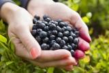 Bąblowica może doprowadzić nawet do śmierci. Wystarczy, że zjesz owoce prosto z krzaczka. To groźna choroba, która latem jest istną plagą