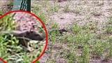 """Lublin: Szczury mają gniazda na placu zabaw. """"Niczego się nie boją i podchodzą coraz bliżej"""". Mamy wideo!"""