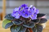 Kwiaty domowe do ciemnego pokoju. Polecamy ładne i łatwe w uprawie rośliny doniczkowe, które lubią cień