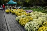"""Premier Morawiecki przedstawił szczegóły pomocy dla sprzedawców kwiatów i roślin. """"Proszę raz jeszcze o zrozumienie dla tej trudnej decyzji"""""""