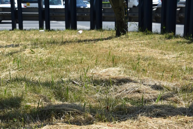 Wysuszone połacie traw na Legnickiej i w okolicach