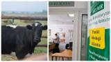 Agro wieści tygodnia: decyzja w sprawie krów z Ciecierzyc, finisz naboru wniosków o dopłaty