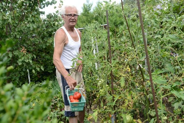 Czesław Woźniak wraz z żoną w czasie wakacji mieszka na działce. - Żona hoduje kwiaty, ja dbam o pomidory